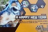 My Dog Style年賀状(プレミアムデザインポストカード)