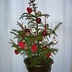 クリスマスツリーキット