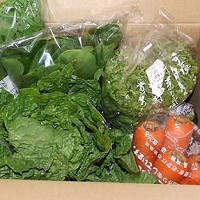 無農薬野菜のミレー お試し野菜セット