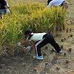 mama farm レンタル農園(稲作)